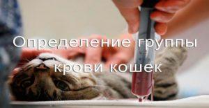 Кошка, шприц