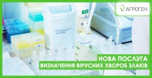 вирусы_пшеницы_ua